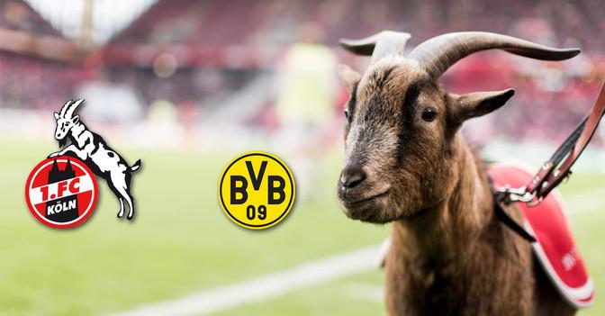 Köln vs. BVB neben Hennes