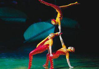 Ovo Cirque du Soleil 5