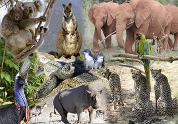 Aktionsgemeinschaft Artenschutz e.V