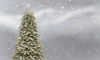 Mit den außergewöhnlichsten Geschenken zu Weihnachten Gutes tun