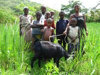 Glückliche Familie mit ihrer Ziege