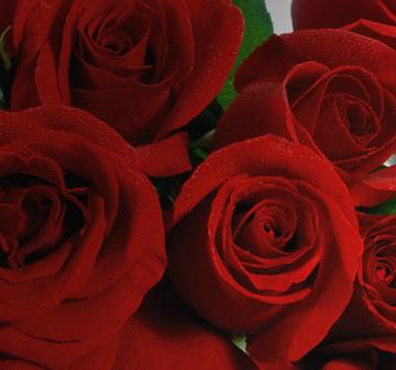 Wir feiern das ganze Jahr lang Valentinstag